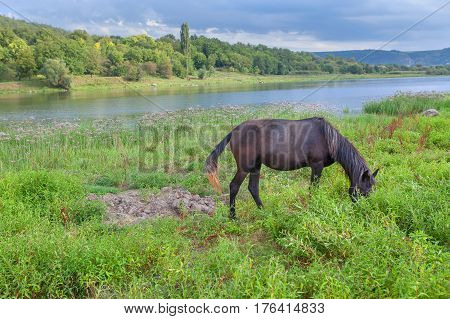 idyllic scenery with  horse grazing on the river shore