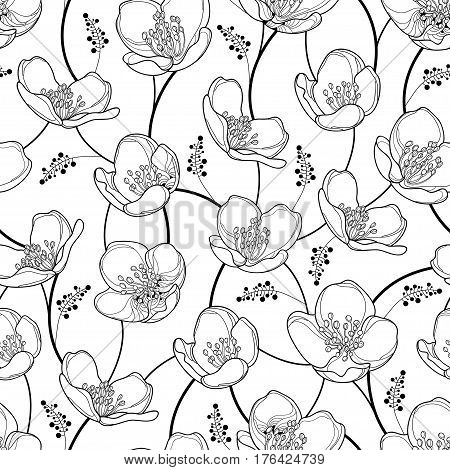 Vector seamless pattern with outline Jasmine flowers in black on the white background. Elegance floral background with jasmin in contour style for spring design and coloring book.