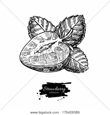 Strawberry vector drawing. Isolated hand drawn berry slice on white background.  Summer fruit engraved style illustration. Detailed vegetarian food. Great for label, poster, print