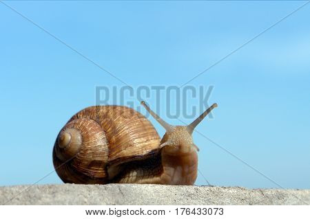 Snail сrawls on the concrete wall on a blue background