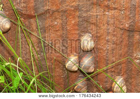 Snails creep on a concrete wall on a red background
