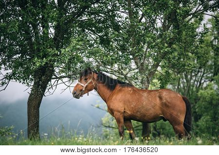 Horse stands under the tree with mountains at the background