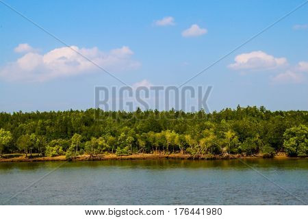 River with mangrove trees and blue sky.