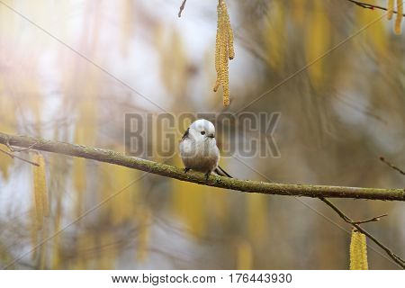 cute fluffy bird in spring forest with sunny hotspot, wild birds, wild birds, the little white bird, nice muzzle
