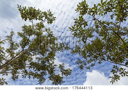 Summer Foliage Against Sky Backgrounds