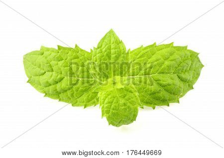 Sprig of fresh mint isolated on a white background.