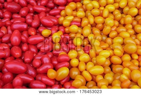 Closeup of Red and Yellow Jellybean Tomatoes