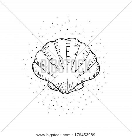 Hand drawn vector illustrations of seashells on a white background sketch doodle.