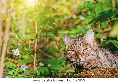 The cat hunts in the spring forest the green grass.