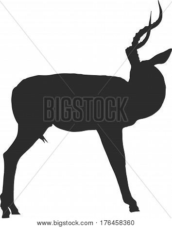 Silhouette of a blackfaced impala looking back - digitally hand drawn vector illustration