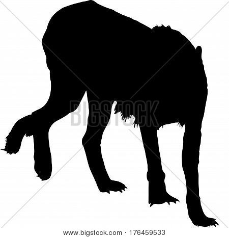 Silhouette of a walking hungry and angry cheetah - digitally hand drawn vector illustration