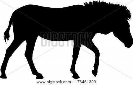 Silhouette of a hartmann mountain zebra, standing - digitally hand drawn vector illustration
