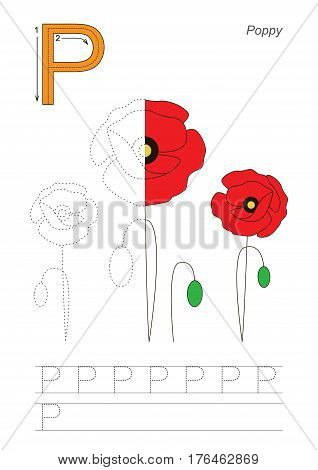 Vector exercise illustrated alphabet, kid gaming and education. Learn handwriting. Half trace game. Easy educational kid game. Tracing worksheet for letter P. Poppy.