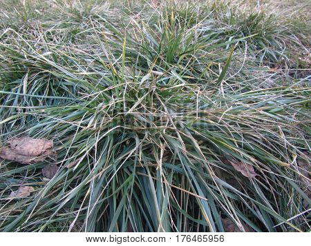 Green stems on the background of dry grass. Living and dead