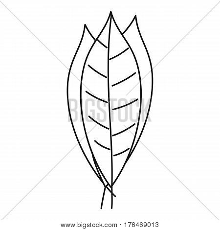 Bay leaves icon. Outline illustration of bay leaves vector icon for web