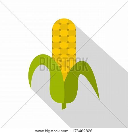 Ripe corncob icon. Flat illustration of ripe corncob vector icon for web isolated on white background