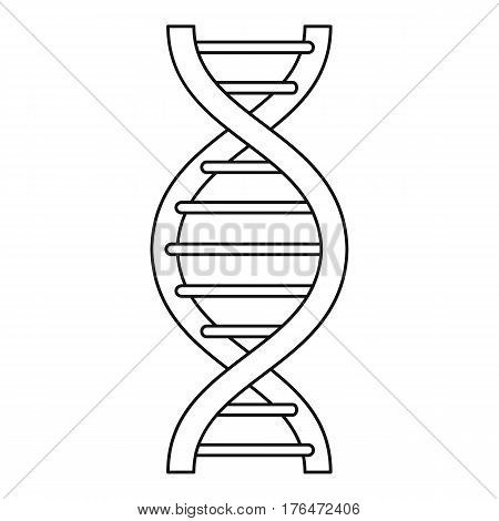 DNA strand icon. Outline illustration of DNA strand vector icon for web