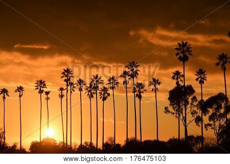 Palm trees against beautiful sunset in Los Angeles California