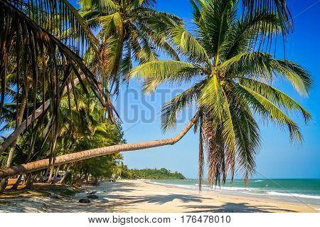 Palm on the Perfect beach Thailand´s east coastline