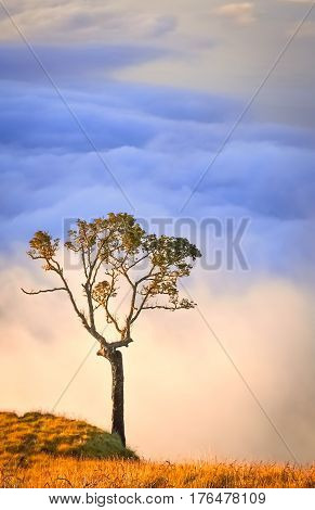 Lonely tree on a top of a ridge of Gunung Rinjani volcano in Lombok island Indonesia