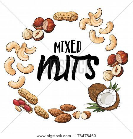 Round frame of coconut, cashew, peanut, hazelnut, almond nuts with place for text, sketch style vector illustration isolated on white background. Round frame of various nuts with place for text