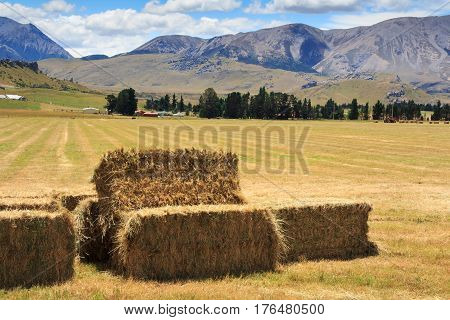 lanscape with haystacks at the harvest time, location - Wellington, South Island, New Zealand