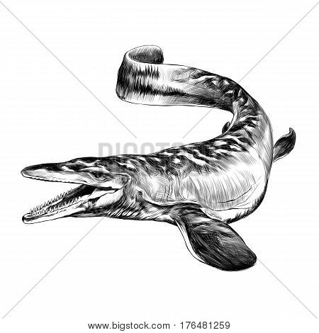 aquatic dinosaur with flippers sketch graphics vector black and white drawing