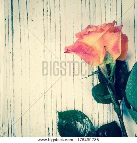 Roses on wooden background. Vintage Retro Filter. Selective focus.