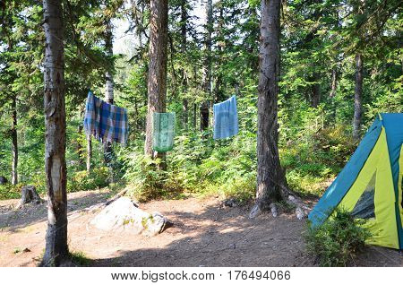 in the coniferous forest is a tent. tight through the trees the rope. washed clothes drying