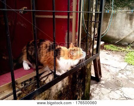 Curious orange and black cat on a window