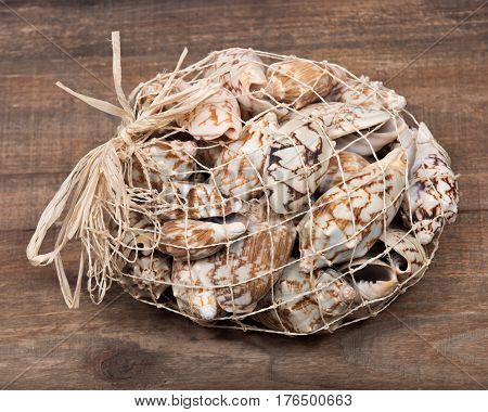 Decorative bag of bat volute sea shell, cymbiola vespertilio, volutidae family on wooden vintage tray