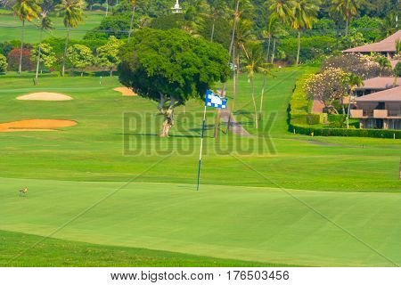 A bird is on the green with sand traps visible in the distance