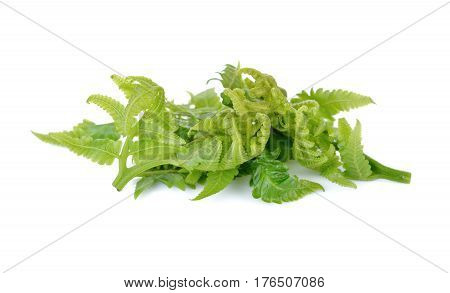 fresh vegetable fern or paco fern on white background