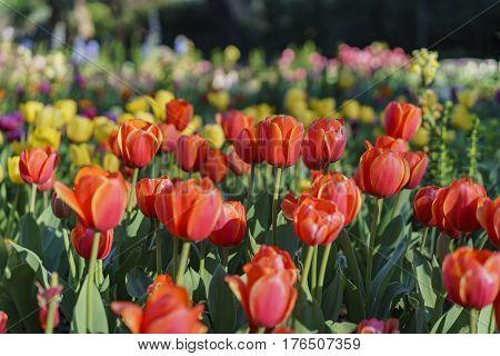 Beautiful Flower Blossom At Descanso Garden