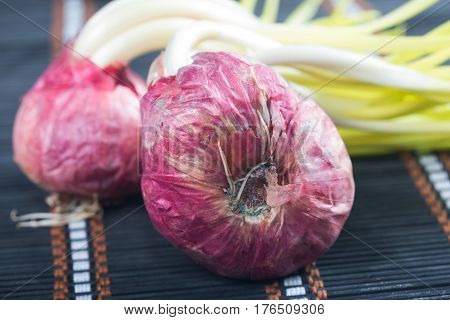 Germinated onion isolated on a mat background