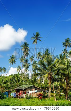 Typical house in Bouma village surrounded by palm trees on Taveuni Island Fiji. Taveuni is the third largest island in Fiji.