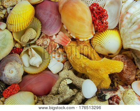 Colorful seashells and dead hard coral on a beach