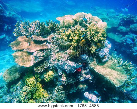 Coral Reef In Somosomo Strait Off The Coast Of Taveuni Island, Fiji