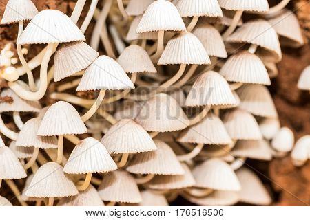 White mushroom in the forest. Mushroom hunting.