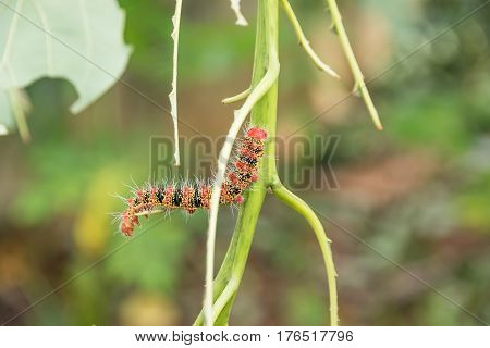 A Group Of Moth Caterpillars On Leaf