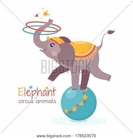 Сircus elephant balances on ball and twists the hoops with its trunk. Vector illustration in cartoon style for ticket invitation card flyer etc. Trained animal performs on the scene