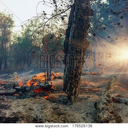 Forest Fire Wildfire burning tree in red and orange color.