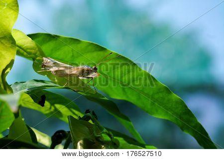 butterfly feeding on flower in a summer garden