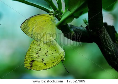 A couple butterfly feeding on green leaf in a summer garden