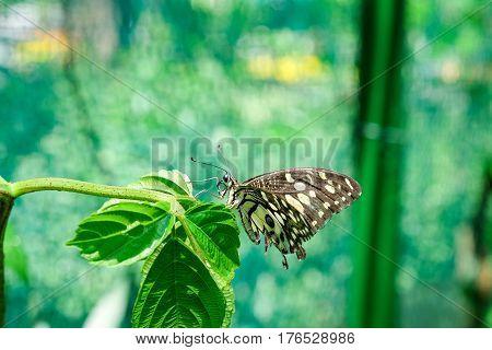 A butterfly feeding on green leaf in sunshine