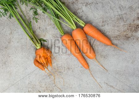 Fresh organic carrots with green tops on old table. Correct and abnormal concept. Copy space. Top view.