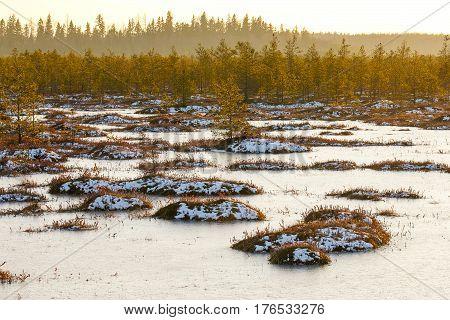 Orange Grass On A Swamp In Winter