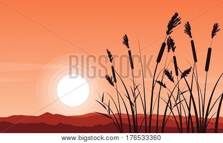 Silhouette of coarse grass on hill vector illustartion