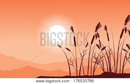 Silhouette of coarse grass with mountain background landsacpe illustration