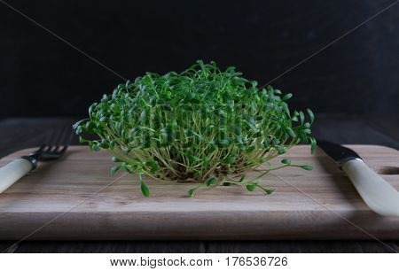 Fresh cress sprouting ready for salad. Healthy vegetarian food. Fresh herbs